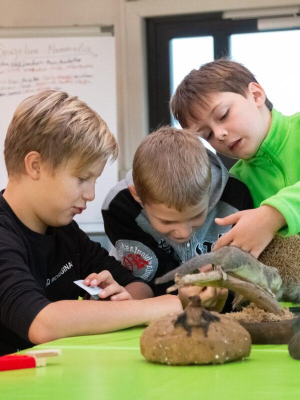 Jungen Naturwächter streicheln ein ausgestopftes Säugetier