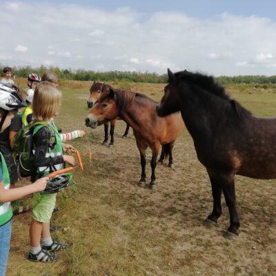 JuNas Radtour zu den Wildpferden