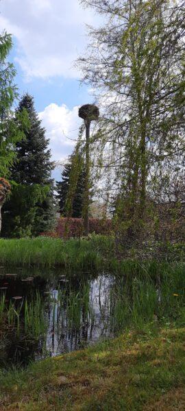 Storchenhorst