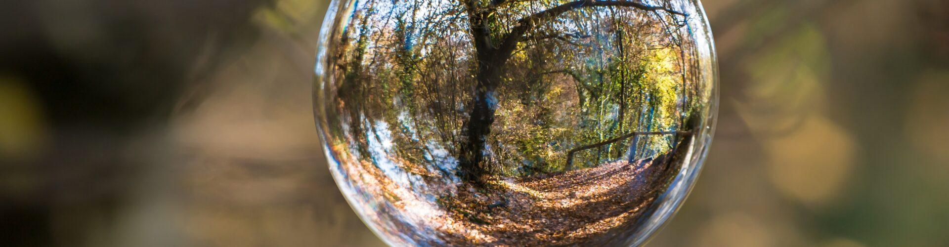 Glaskugel, in der sich ein Wald spiegelt